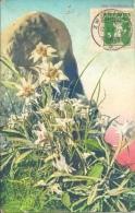 Stockhorn - Edelweiss              1916 - BE Berne