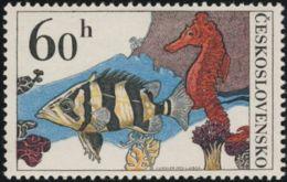 Czechoslovakia / Stamps (1975) 2142: Aquarium Fish (Datnoides Microlepis, Hippocampus Guttulatus) Painter: Josef Liesler