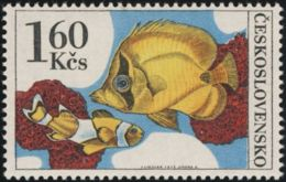 Czechoslovakia / Stamps (1975) 2145: Aquarium Fish (Amphiprion Percula, Koralovka); Painter: Josef Liesler