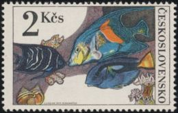 Czechoslovakia / Stamps (1975) 2146: Aquarium Fish (Pomacentridae, Zebrasoma, Pomacanthus); Painter: Josef Liesler