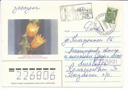 Registered Solo Cover - 29 December 1987 Lielvārde - Kaktus Cactus Pfeiffera Ianthothele