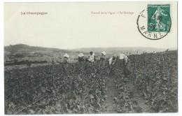 51 - LA CHAMPAGNE - Travail De La Vigny - Le Sarclage - CPA - Non Classificati