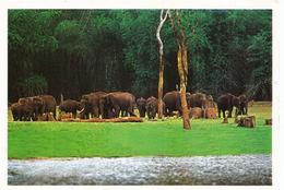 INDIA. Wild Elephants,  Periyar National Park, Kerala State, Written Post-card From India - Olifanten