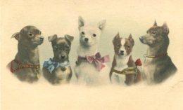 STRANGE DOGS ~ EXCELLENT EARLY Postcard Signed REICHERT 1900 - Honden