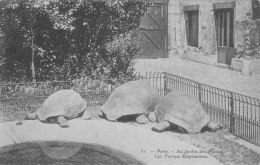 Paris - Au Jardin Des Plantes, Les Tortues éléphantines - Parken, Tuinen