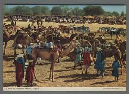 U6041 NIGERIA CAMELS IN MONGUNO MARKET (mik) - Nigeria