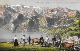 FROHNALPSTOCK → Ausflügler Mit Kühen Gegen Die Urneralpen Gesehen Anno 1925 - SZ Schwyz