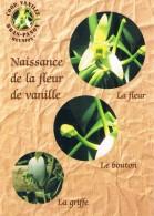 LA REUNION - COOPERATIVE DE VANILLE DE BRAS-PANON - Naissance De La Fleur De Vanille, Bonton, Griffe - 2 Scans - La Réunion