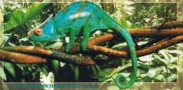 MAURITIUS - LA VANILLE CROCODILE PARK - CAMELEON - Carte Neuve 20cm X 10cm - 2 Scans - Maurice