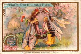 6 Chromos - LIEBIG - Histoire Naturelle Enfantine - S576 - 1 A 6  - Park1-1 - R/v - Liebig