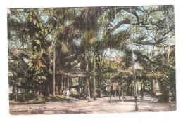 Great Banyan Tree Calcutta Pakistan Formerly India Vintage Postcard - Pakistan