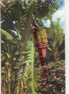 ESPAGNE - ISLAS CANARIAS - FLEURS ET BANANES  BANANA TREES - Espagne