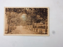 Carte Postale Ancienne : AIGUES-VIVES : L'Avenue - Aigues-Vives