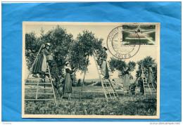 Cueillette Des Olives-en PROVENCE -Environs D´ARLES-gros Des Femmes Sur Les échelles-a Voyagé En 1958 - Cultures