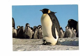 Cpm - Terre Adélie Robert Guillard EPF Expeditions Polaires Françaises Manchot - Empereur PINGOUIN - Base Dumont - Tierwelt & Fauna