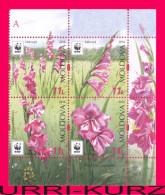 MOLDOVA 2016 Nature Flora Plants WWF Wild Meadow Field Flowers Gladiolus Imbricated Block Of 4v Mi.958-961Zd MNH