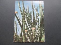 AK / Werbepostkarte 1960 La Reunion. Saint Denis. Kaktus / Cactus - Publicité