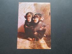 AK / Werbepostkarte 1961 VII Rio Muni. Maggi Postkarte. Schimpansen - Advertising