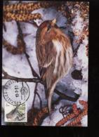 Belgie Buzin Vogels Birds 2457 Maximumkaart RR Carte Maximum Card Carte Speciale 10/7/1993 Bruxelles - 1985-.. Oiseaux (Buzin)