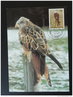 Carte Maximum Card Oiseau Bird Aigle Eagle Milan Royal Cachet FDC Luxembourg 1992