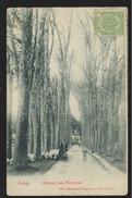 +++ CPA - RONGY - Avenue Des Platanes - Carte Animée   // - Brunehaut