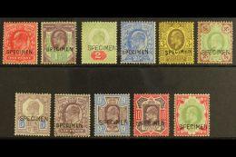 "1902-10 De La Rue Printings Most Values Between 1d And 1s All With ""SPECIMEN"" Overprints (between SG Spec..."