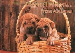 CPSM Doggone I Miss You....from Alabama-Chien-Sherpeï     L2268 - Etats-Unis