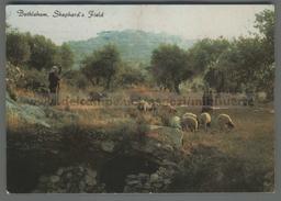 U6144 PALESTINE BETHLEHEM STEPHERDS FIELD VG SB (m) - Palestina