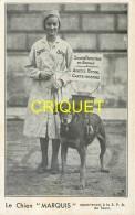 37 Tours, S P A , Cp Publicitaire, Le Chien Marquis
