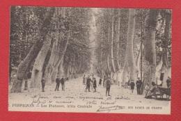 Perpignan  -- Les Platanes  --   Allée Centrale - Perpignan