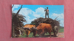 Puerto Rico   Sugar Cane Harvest - --ref  2371 - Puerto Rico