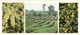 Grape - Tea Plantation - Citrus - 1983 - Georgia USSR - Unused - Géorgie