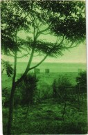 ILE D´OLERON (17) Sous Bois à La Plage De LA BREE - Très Très Rare - Carte Postée - Ile D'Oléron