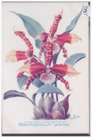ORCHIDEE - FLEURS - PUBLICITE DARRASSE PHARMACIE A PARIS - TB - Advertising