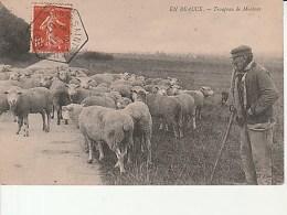 En Beauce-Troupeau De Moutons.ND Photo.Cachet Hexagonal De St Loup.