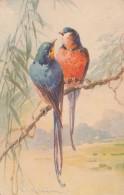 Très Belle Carte Postale Ancienne De Perroquet Par L´illustratrice Catharina Klein
