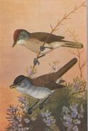 """CPA ANIMAL La Fauvette à Tête Noire Reproduction De Dessins """"Les Oiseaux De France"""" - Birds"""