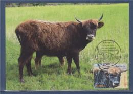 Nature Animaux Disparus Ou Menacés D'extinction Carte Postale 1er Jour N°4374 Villotte Devant Louppy 20.6.09 L´Aurochs