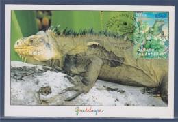 Nature Faune En Voie De Disparition France Outre-Mer 1e Jour Carte Postale N°4033 Terre De Haut 28.4.07 Iguane Antilles