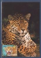 Nature Faune En Voie De Disparition France Outre-Mer 1er Jour Carte Postale N°4035 Cayenne 28.4.07 Le Jaguar De Guyane