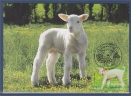 Nature Faune Jeunes Animaux Domestiques 1er Jour Carte Postale N°3900 Lutterbach 22.4.06 L'agneau