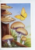 Angola-1999-Champignons,papillion-YT B59***MNH***MNH