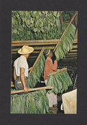 FLEURS - PLANTES - TABAC - RÉCOLTE DE TABAC - GREEN SHADE TOBACCO LEAVES - BY SHADE TOBACCO GROWERS AGRICULTURAL - Tabaco