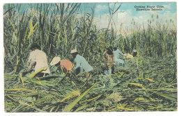 Cpa Usa - Hawaï - Cutting Sugar Cane - Hawaiian Islands  (cane à Sucre, Négritude )    ((S.700)) - Etats-Unis