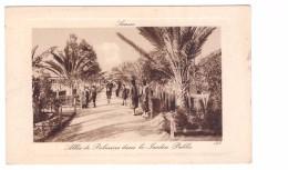 Tunisie Sousse Allée Des Palmiers Dans Le Jardin Public , Carte Non Voyagée - Tunisia