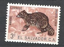 EL SALVADOR 1963 Fauna MAPACHE USED Procyon Lothor