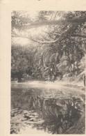 ALGER - Le Jardin D'essais (photo)