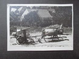 CP BELGIQUE (V1611) AARTSELAAR (2 Vues) Jan Delvaux Kapellestraat 146 - Agriculture - Aartselaar