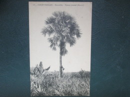 CONGO FRANCAIS . BRAZZAVILLE . PALMIER EVANTAIL - Congo Français - Autres