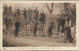 CP - 11 - Limoux Institution Agricole Saint Joseph Leçon De Taille Dos  1942 - Limoux